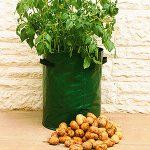 Мешок картошки – посадка, выращивание, уход, сбор урожая, советы, плюсы и минусы